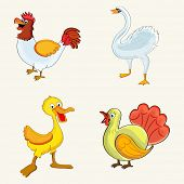 Set of cute cartoons of colorful birds like hen, swan, duck and turkey on beige background.