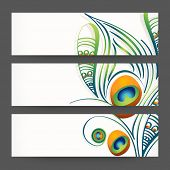 Website header or banner set decorated with colorful feathers.
