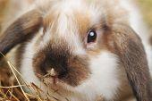 Cute Small Rabbit