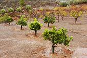 Orchard in Parque Natural de Pilancones, Gran Canaria, Spain