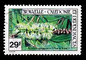 New Caledonia  1982
