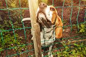 dog loooking up through fence net