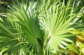 Green thickets of tropics.
