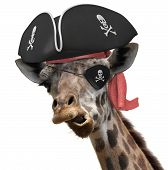 stock photo of crazy hat  - Humorous animal portrait of a giraffe wearing a pirate hat and eyepatch and making a silly face - JPG