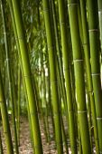stock photo of bamboo forest  - Close up of a bamboo forest in a Chinese park - JPG