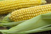 foto of monocots  - Large mature young corn on the wooden background - JPG