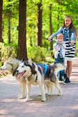 foto of laika  - little boy and girl riding on scooter in team of two dogs in park - JPG