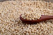 pic of sorghum  - close up of Jowar  - JPG