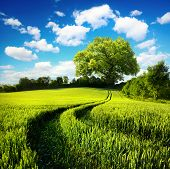 stock photo of track field  - Scenic rural landscape with a green wheat field and tracks leading to a huge tree with blue sky and white clouds in the background - JPG
