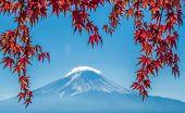 picture of mount fuji  - Mount Fuji and autumn maple leaves Kawaguchiko lake Japan - JPG