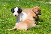 image of little puppy  - Mixed - JPG