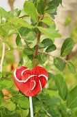 pic of valentine candy  - Candy valentines hearts on a green tree - JPG