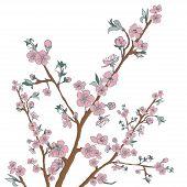 stock photo of moon-flower  - Flowering cherry branch on white - JPG