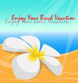 picture of plumeria flower  - Plumeria flower on the beach with text - JPG