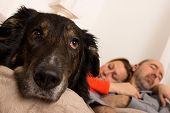 stock photo of sad dog  - Dog is lying sad on a couch while the masters sleep  - JPG