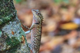 stock photo of lizards  - Green crested lizard - JPG