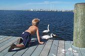 Boy Watchcing Swans
