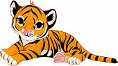 stock photo of tiger cub  - Image of cute little tiger cub resting - JPG