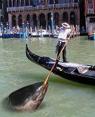 Venedig Thunfisch
