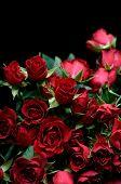 Rose Boquet