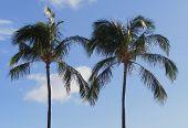 Love from Waikiki