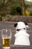Dog And Pint
