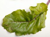 Beet Leaf