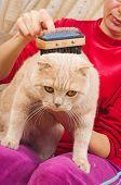 Grooming Cat Brush