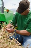 Farmer Examining Grass Seed