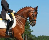 Equestrian sport: competition for dressage