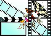 Butterfly on the background of the film