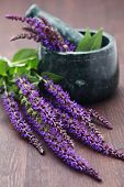 foto of purple sage  - mortar and pestle with fresh sage flowers  - JPG