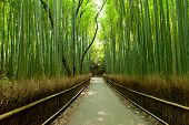 picture of bamboo forest  - Famous bamboo grove at Arashiyama - JPG
