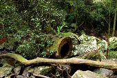 pic of hollow log  - Hollow log hidden in the rainforest in Australia - JPG
