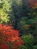 Autumn'S Splendour2