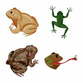 Isolated Object Of Frog And Anuran Logo. Set Of Frog And Animal Stock Vector Illustration. poster