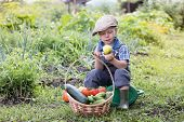 Little Farm Boy In The Garden With A Basket Of Vegetables. A Small Child Sitting In The Garden Sitti poster