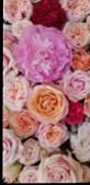 Background Image Of Roses.  Colored Fresh Pastel Roses. Pink And White Roses And Hydrangea. Backgrou poster