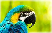 stock photo of jungle birds  - Exotic colorful African macaw parrot - JPG