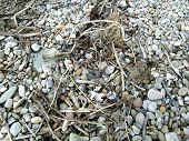 Beach Pebbles And Flotsam