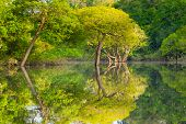 Panorama From Amazon Rainforest, Brazilian Wetland Region. poster