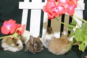 Four Furry Bunnies Huddle In Front Of Flowers And A Picket Fence poster