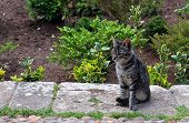 Young Tabby Cat Sitting On Sidewalk In Andalusian Gardens In Rabat, Morocco poster