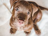 Young, Charming Puppy. Studio Photo. Pets Care poster