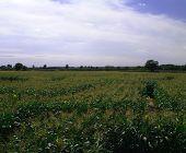 Field 10