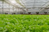 Interior Indoor View Of Organic Hydroponic Fresh Green Vegetables Produce In Greenhouse Garden Nurse poster