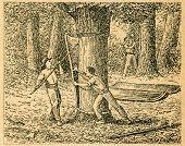 Harvesting cork from cork oaks - old illustration by unknown artist from Botanika Szkolna na Klasy Nizsze, author Jozef Rostafinski, published by W.L. Anczyc, Krakow and Warsaw, 1911