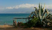 Green Agave Near Sea Coast