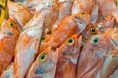 stock photo of mullet  - Red mullet fish for sale on a market - JPG