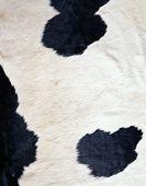 Koe textuur